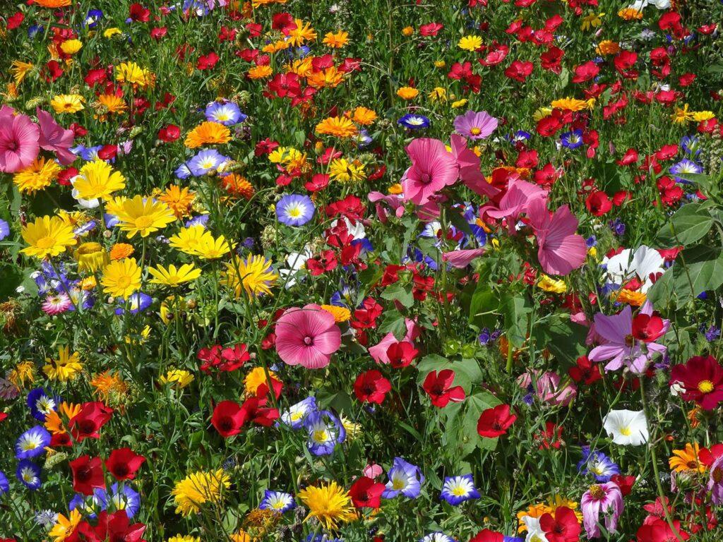 Flower Your Place Aurora