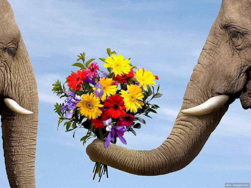 elefant.love