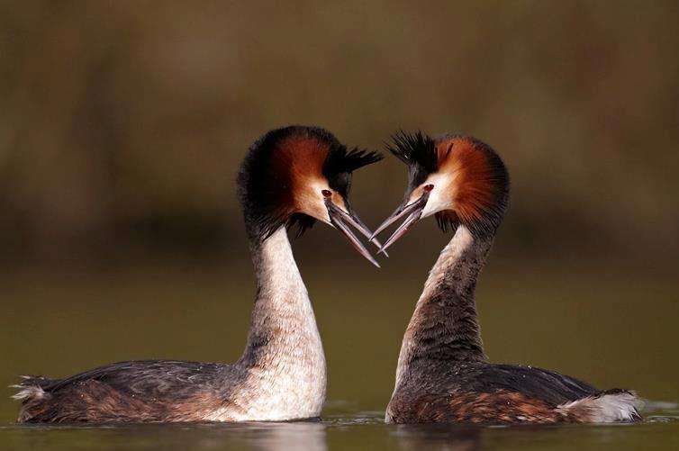 vocsok.love