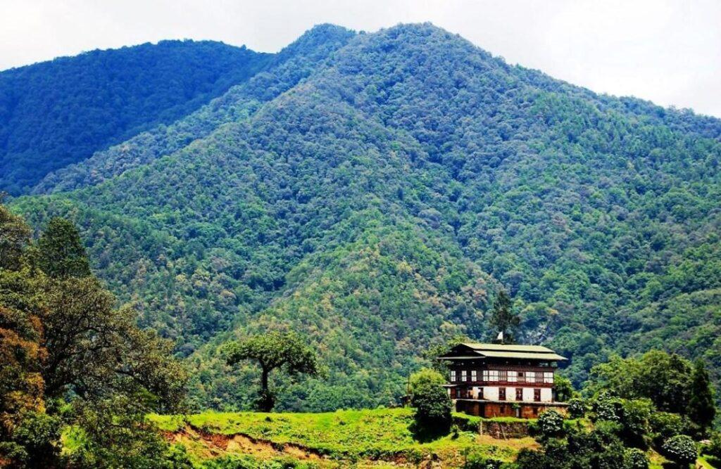 190721 Bhutan Wald